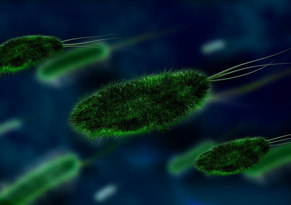 bacteria - viruses