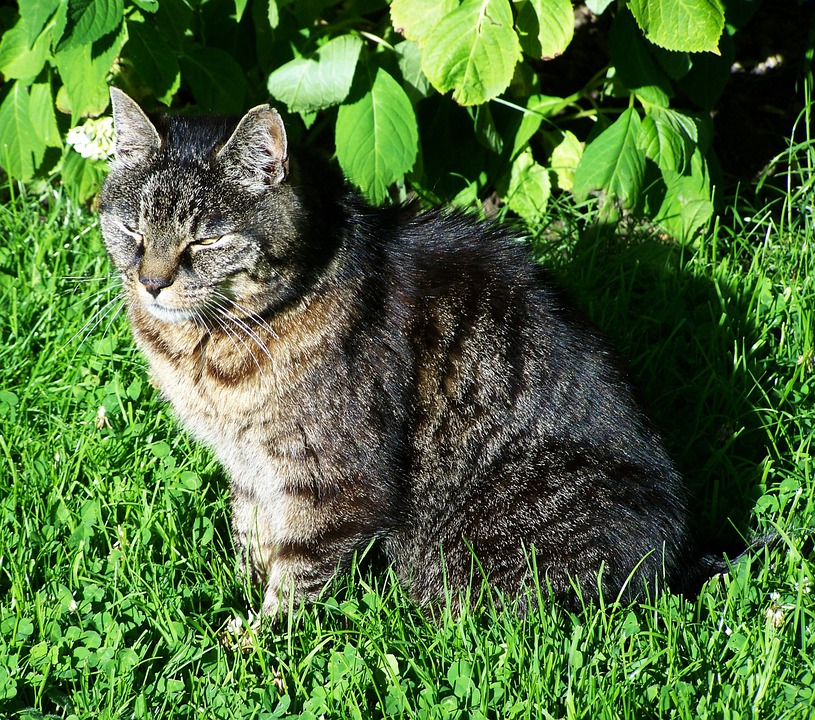 brown gray cat