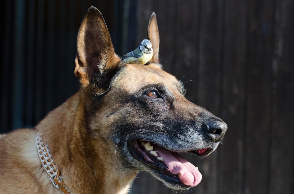 dog & bird