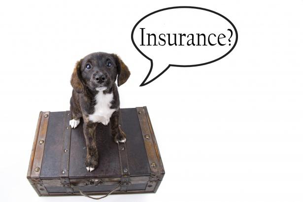 pet insurance for dog