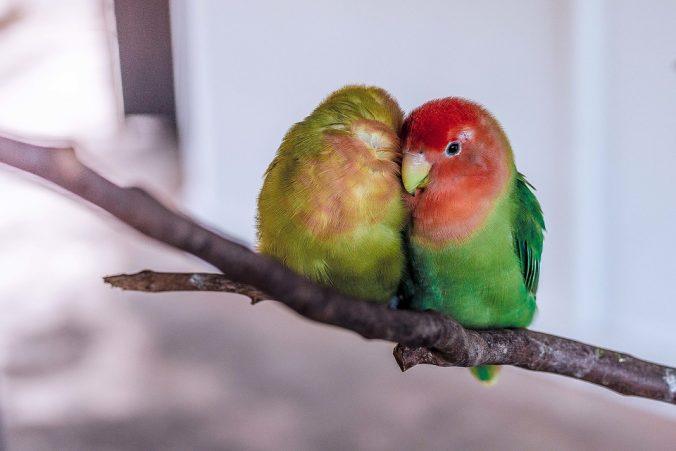 parrot & ornithosis
