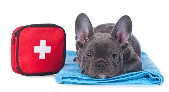 a dog's medicine cabinet